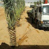 مزارع النخيل 0501486416