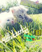 القطط)من كل شي مايحتاج nوالزين يستهل في توصيل n