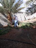 تكريب وتلقيح النخيل وتنسيق الحدائق