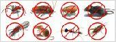 مكافحة جميع الحشرات والقوارض بافضل المبيدات