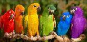 فندق الطيور - محايل عسير