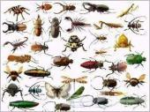 مكافحة الحشرات والنمل الابيض .. مكافحة حشرات