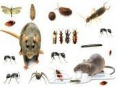 شركة رش مبيدات (خصومات) مكافحه حشرات بالضمان