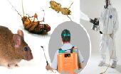 شركة مكافحة حشرات ونظافة