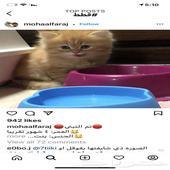 ابغى قطه للتبني عمر شهرين بالدمام وماحولها