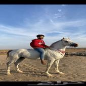 حصان شعبي بسعر السوق