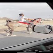 حصان شعبي شيخ (( تممم البيععع)