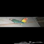 روز طيور