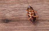 شركة مكافحة حشرات بالرياض مكافحة الصراصير