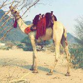 الرياض - سوداني ابحث عن عمل في