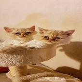 قطه - عندي قطوه بيكي فيس