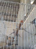 البيع طيور الحب منتج العدد 12