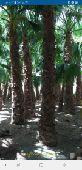 عشب صناعي وعشب طبيعي  0556975686