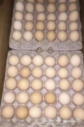 متوفر بيض بلدي