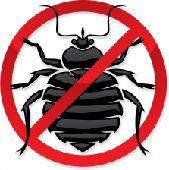 شركة مكافحة حشرات ورش مبيدات بالطائف