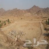ارض في الجعرانه مساحتها 6500
