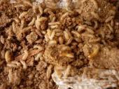 شركة رش صراصير بق نمل فئران عتة نمل ابيض وزغ