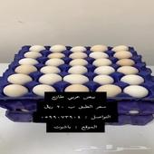 بيض عربي بلدي طازج باشوت سبت العلايا البشاير