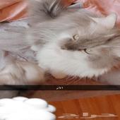 قطط حلوه