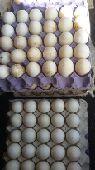 جميع انواع البيض  دجاج  بط بكين شرشير بح بلدي