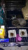 للتبني منك اي انواع القطط الخارجيه الاحتياج 5