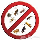 رش مبيدات بالرياض ( للبيوت ) صراصير نمل فران