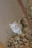 قط جميل شيرازي وبسعر مناسب