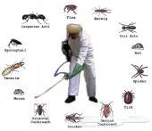 شركة مكافحة حشرات رش ميدات