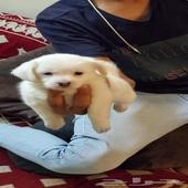 كلب للبيع (عمره شهر واحد )