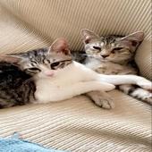 قطط 2 للبيع