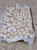 بيض دجاج  فيومى  للأكل