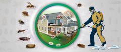 مكافحة حشرات ورش مبيدات بجازان