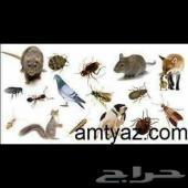 شركه السلوي لمكافحه الحشرات بالرياض ونظافه