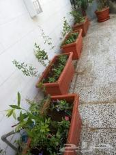 الاحواض الزراعيه والعشب الصناعى وتكريب النخيل