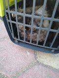 قطة للبيع لدواعي السفر