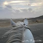 حصان واهو والبيع شعبي