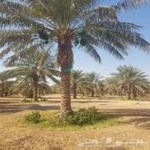 ابو اسلام للتنسيق الحدائق