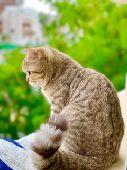 توصيل قطط وكلاب بين مدن المملكة