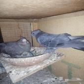 حمام صنعاني