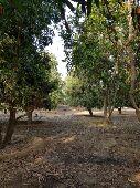 مزرعه مساحتها كبيره طريق ابو عريش صبيا