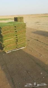 ثيل طبيعي مزارع الخرج