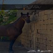 حصان شعبي سرعه