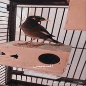 طير (للبدل)