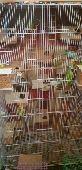 طيور للبيع جواهز للانتاج