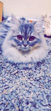 قطة للبيع..