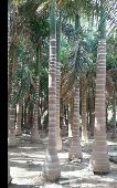 تنسيق الحدائق والنجيل الصناعي(خميس مشيط )