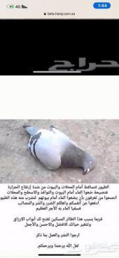 سقيا الطيور - سقايات الماء للطيور والمخلوقات