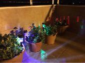 لمبات لتزيين الحدائق بالطاقة الشمسية led