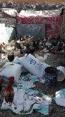 دجاج للبيع او البدل بمعزاء