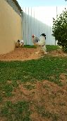 مزرعة تايما لدجاج الزينة